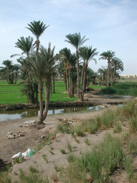 Irrigation canal
