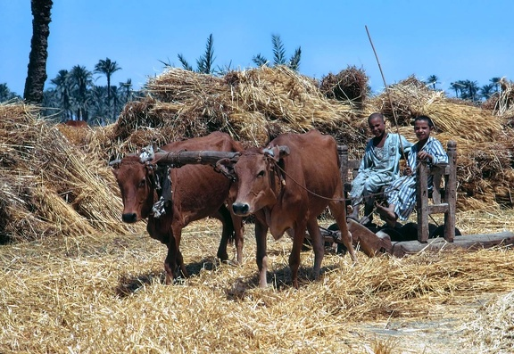 Threshing (Fayoum)